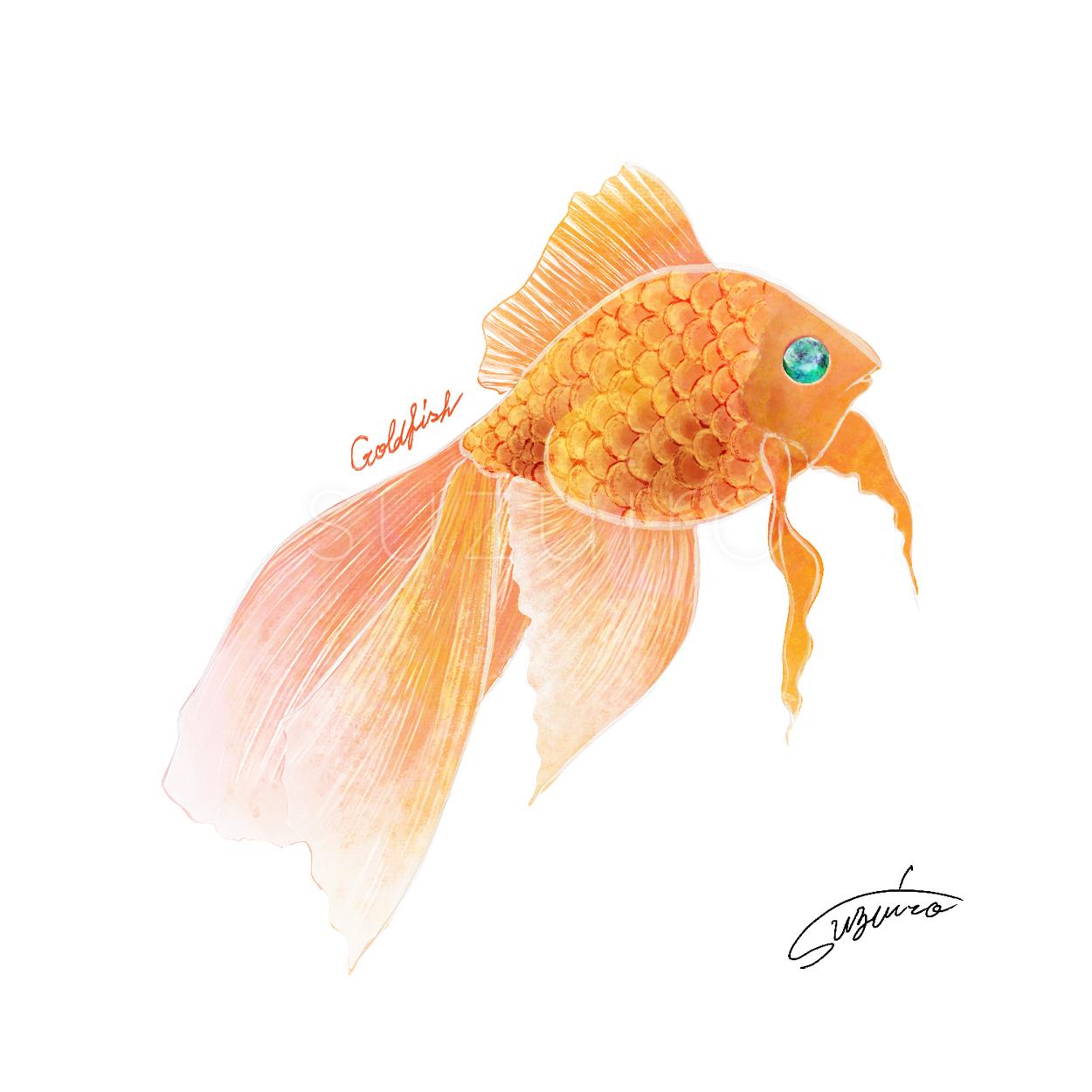 goldfish_suzuiro
